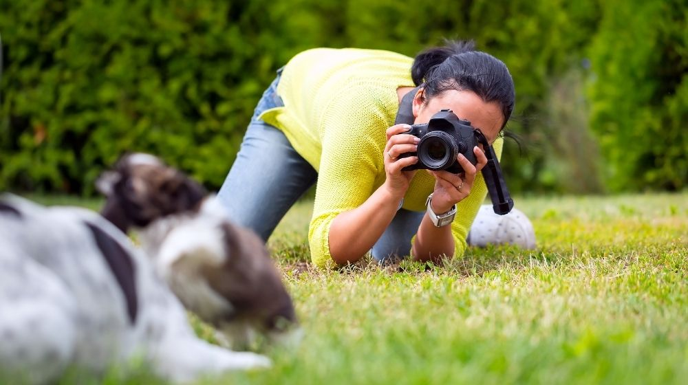Young photographer taking a photo of playing dogs | feature | Be a Better Pet Photographer