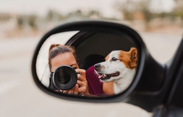 young woman taking a picture with camera on mirror of her cute small dog watching by the window | Relax | Be a Better Pet Photographer